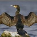 Proxecto de ampliación da Rede Natura 2000 de Galicia