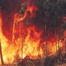 Contra a depredación do país polos que se lucran co lume