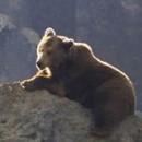 As mentiras do oso